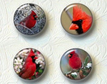 "Cardinals Magnet Sets, 1.5"" in Size, Choose your favorite from the 4 Different Sets 537"