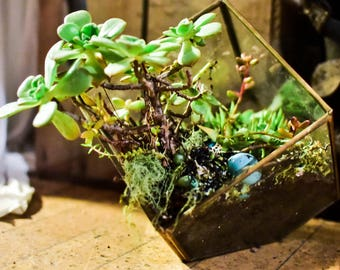 Can not box in our natural nature. Succulent vertical guarden. Terrarium.