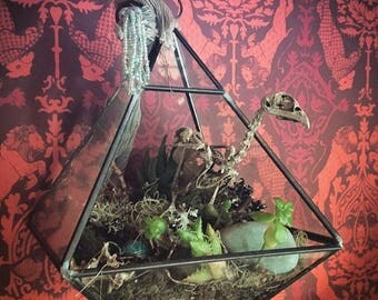 Jurassic.  hanging terrarium succulent, moss art piece