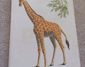 Large Illustrated School Flash Card Poster - Alphabet Letter - Giraffe G - Many to choose from