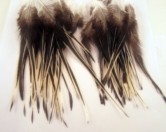 12 Laced Feathers, Natural Laced Hen Loose Feather Craft Feathers