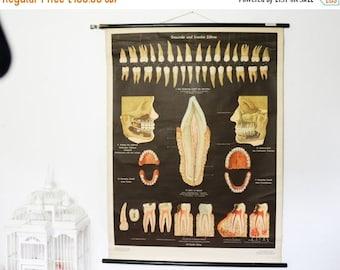 SALE Vintage Chart, Teeth, Anatomy