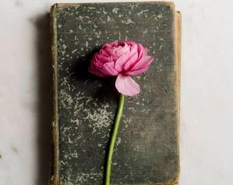 flower and book photo, ranunculus art print, pink flower art, romantic floral print, floral nursery decor, chic flower art, girls room decor