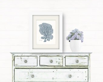 Coastal Decor Venus Sea Fan Sea Coral Giclee Art Print 8x10 French Blue