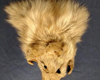1 real animal fur Tanned  amber fox face head taxidermy skin pelt hide part