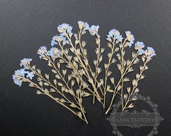 1pack tiny blue flower branch dry pressed flower DIY material for glass dome resin 12pcs each pack 1503129