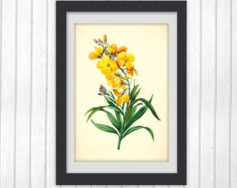 Botanical Print, instant download art, floral printable, Flower wall art, yellow flower INSTANT DOWNLOAD #190