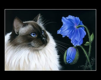 Ragdoll Cat Print Blue Poppy by Irina Garmashova