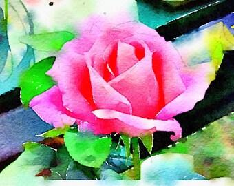 Watercolor Print - Pink Rose - Floral
