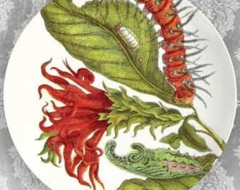 botanical artwork IX melamine plate