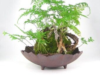 Shallow Brown Succulent Pot, Rounded Bonsai Pot, Kusamono Planter, Kokedama Dish, Shallow Planter, Unglazed Plant Pot with Drainage 01-17-12