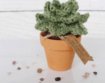 Succulent : Crochet Plant in Tera Cota Pot