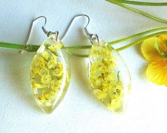 Real Dried Flower Yellow Statice Limonium Drop Resin Everlasting OOAK Floral Earrings