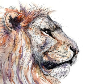 Print -Watercolour Lion - Archival art print of watercolour and ink Lion drawing