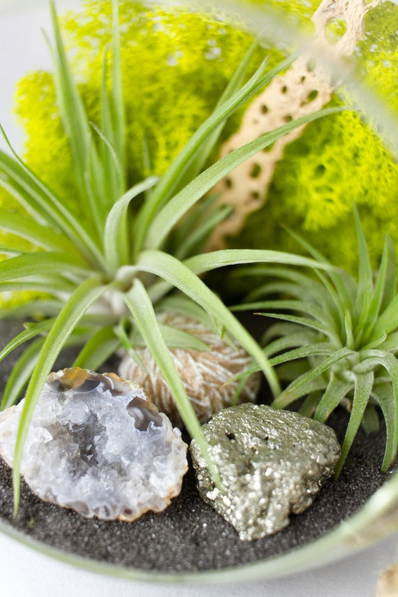 DIY Terrarium Kit with Air Plants, Geode, Pyrite, & Desert Rose || Natural Modern || Large Round Hanging