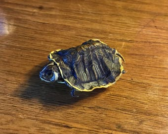 The Tiniest Taxidermy Baby Yellow Ear Slider Turtle, Perfect for Jewelry