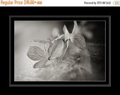 ON SALE Black & White Flower Photography, Hydrangea Photograph, Horizontal Wall Art, Still Life Floral Macro Photo, Fine Art Nature Phot
