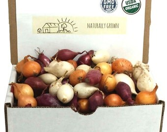 Mixed Red White and Yellow Onion Sets Organic Non-GMO   Onion Bulbs 1 Pound Spring shipping