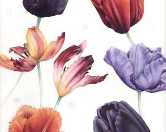 "Tulip painting | Original watercolour | Botanical art | 8.5"" x 12"" | Flower watercolor | Colourful tulips | Botanica by Helen Lush"