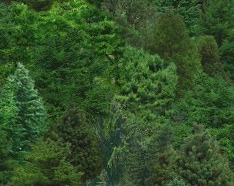 Discount Sale ***Trees/Bushes Green backgorund  176**Elizabeth studio-Landscape Medley fabrics