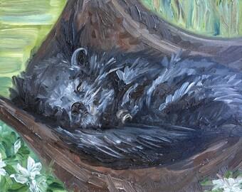 "Asleep Among the Gardenias - Timber, the Binturong at Zoo Atlanta, oil on panel, 8"" x 10"""