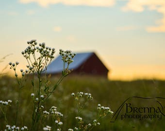 Farm N Flowers