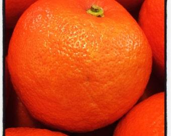 Heirloom Navel Orange Marmalade