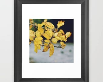 Beautiful Leaves,Printable Photography,Home Decoration,Instant Download,Modern Minimal