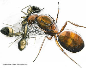 Ant Queen bug art illustration, orginal insect drawing artwork, wildlife print