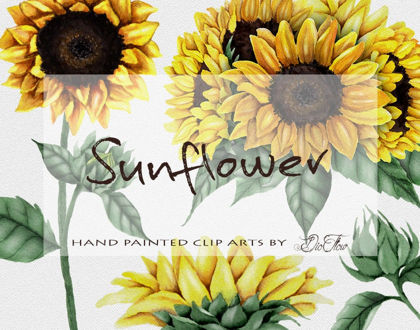 Watercolor Sunflower Clipart Clip Art Summer Sun Flower ...