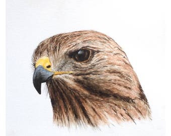 Red-tailed Hawk - (Print)
