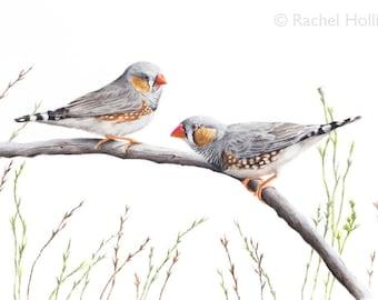 A3 Zebra Finches - Australian Birds - Bird Art Prints - Wall art - Australian Bird Art Print