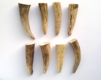 Antler Tips Non Drilled Antler Tips Supply Loose Antler Tips Deer Antler Reundeer Antler Tip Naturally Shed Horns Antlers for Jewelry