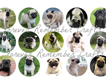INSTANT DOWNLOAD Pug 1 Inch Bottle Cap Image Sheets *Digital Image* 4x6 Sheet With 15 Images