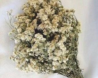 Yarrow flower~dried Yarrow~Yarrow herb~1 oz.