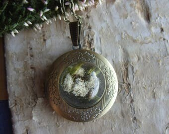 Vintage Locket necklace with real garden edelweiss in resin