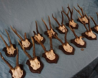 14 Antique Strong Black Forest Roe Deer Antlers Trophy-Plaques Wallmounts- Hunting Lodge Decor - Wall Decor Collection 274