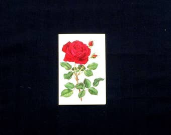 Red Rose Post Card - American Greetings - Excellent Condition - Never Used