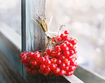 Viburnum red berries Instant Digital Download Art Photography Printable, nature photography, red and blue home decor, guelder rose berry