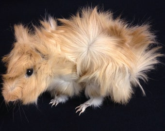 Taxidermy Guinea pig