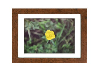 Light in Darkness: Unique & Rustic - Buttercup Image (with frame)
