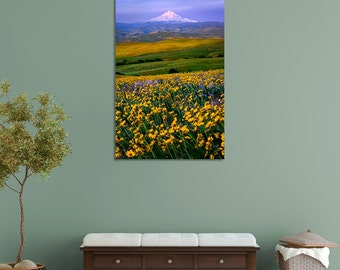Metal Wall Art, Columbia Hills, Washington, Mt. Hood Oregon, Yellow Wildflowers, Mountain, Pacific Northwest, Landscape Nature Photography