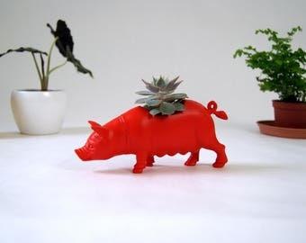 Little Plant Pot Red Pig. Garden box for little plants. Indoor plant holder. Pot for succulent or cactus. Planter, red pig shape