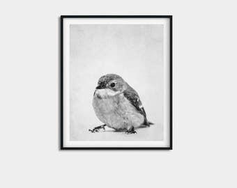 Bird print, bird art, bird nursery art, bird photo, bird artwork, nursery art, animal art, cute bird art, cute bird print, animal art poster