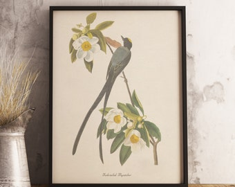 Fork-tailed Flycatcher Print:INSTANT DIGITAL DOWNLOAD Bird print, Antique Bird Painting