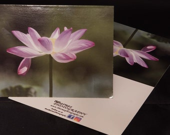 Pink Lotus Flower - Ben Barnes Photography