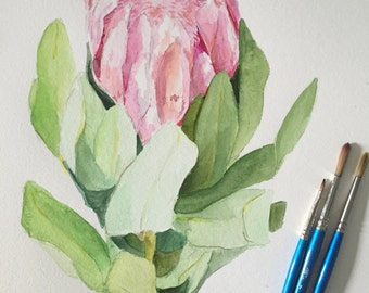 Original Watercolor Protea 11x15