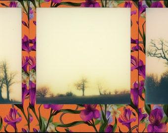 "Original Polaroid Camera Prints, Tryptych ""Ancient Trees'"