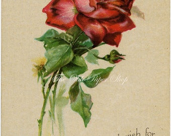 Red Rose and Rosebud on Beige Background Vintage Birthday Postcard 1917