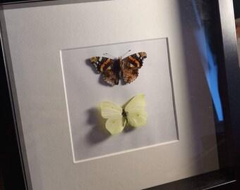 Boxed black deep frame butterflies